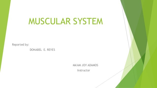 MUSCULAR SYSTEM Reported by: DONABEL E. REYES MA'AM JOY ADAMOS Instructor