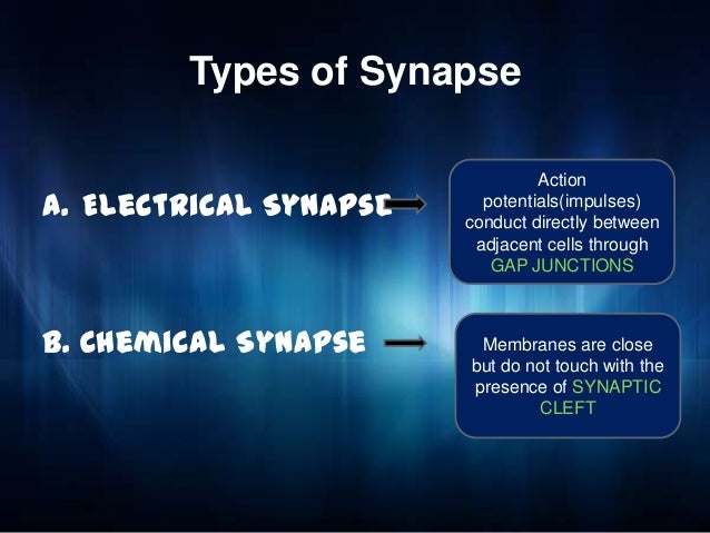 Electrical Vs Chemical Synapse
