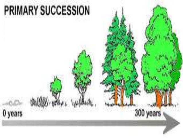 Ecotone and edge effects ecological succession publicscrutiny Images