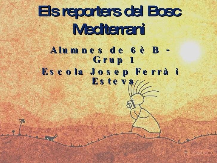 Els reporters del Bosc Mediterrani <ul><li>Alumnes de 6è B - Grup 1 </li></ul><ul><li>Escola Josep Ferrà i Esteva </li></ul>