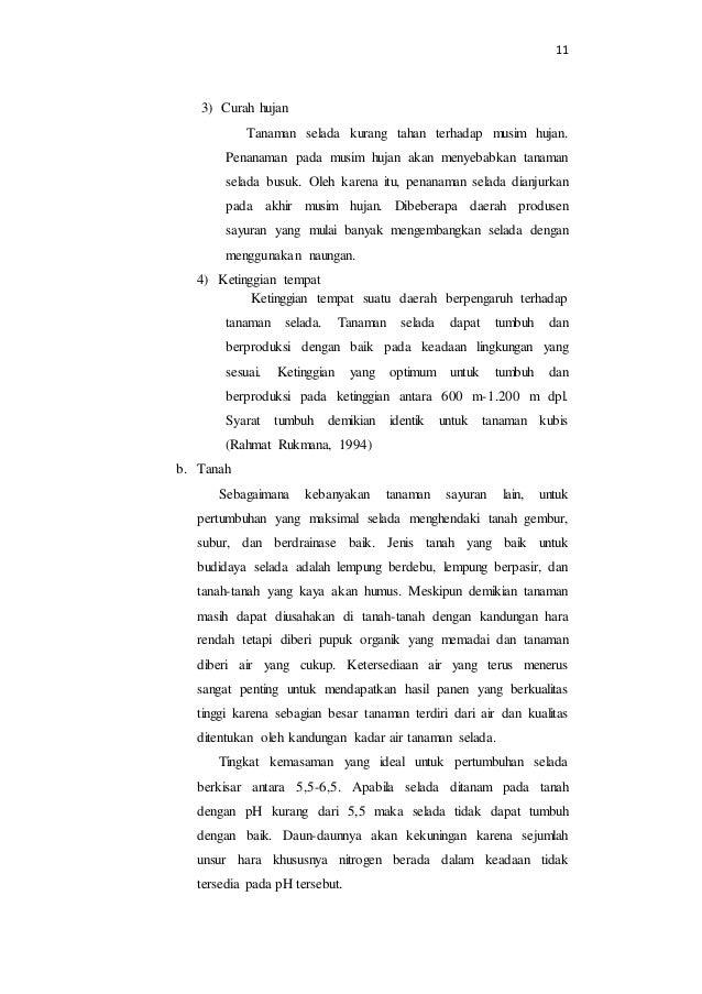 11  3) Curah hujan  Tanaman selada kurang tahan terhadap musim hujan.  Penanaman pada musim hujan akan menyebabkan tanaman...