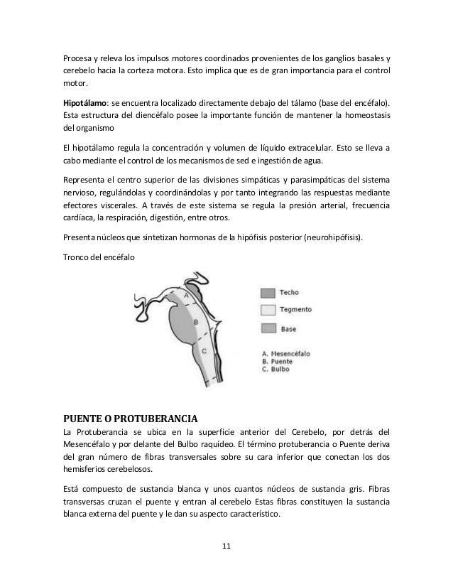 Único Anatomía De Un Puente Molde - Imágenes de Anatomía Humana ...