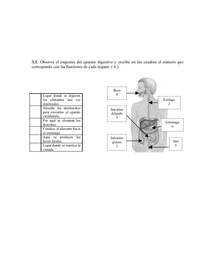 XII. Observa el esquema del aparato digestivo y escribe en los cuadros el número quecorresponde con las funciones de cada ...