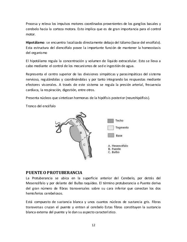 Documento sobre anatomia del sistema nervioso animal