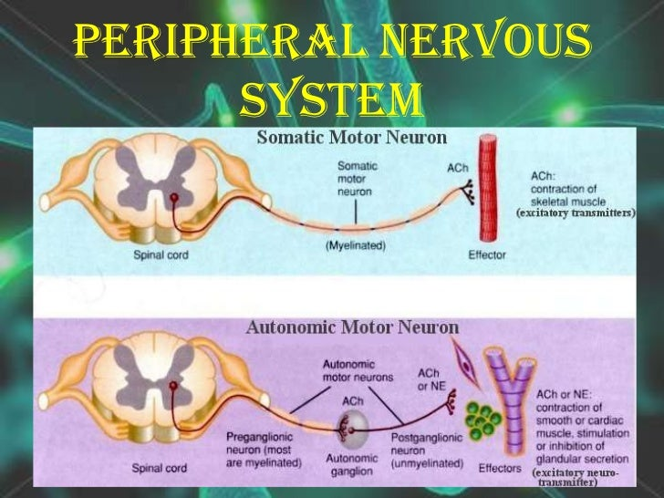 a report of the nervous system Everything you think, feel, and do is controlled by your nervous system learn how it works and what kinds of things can go wrong.