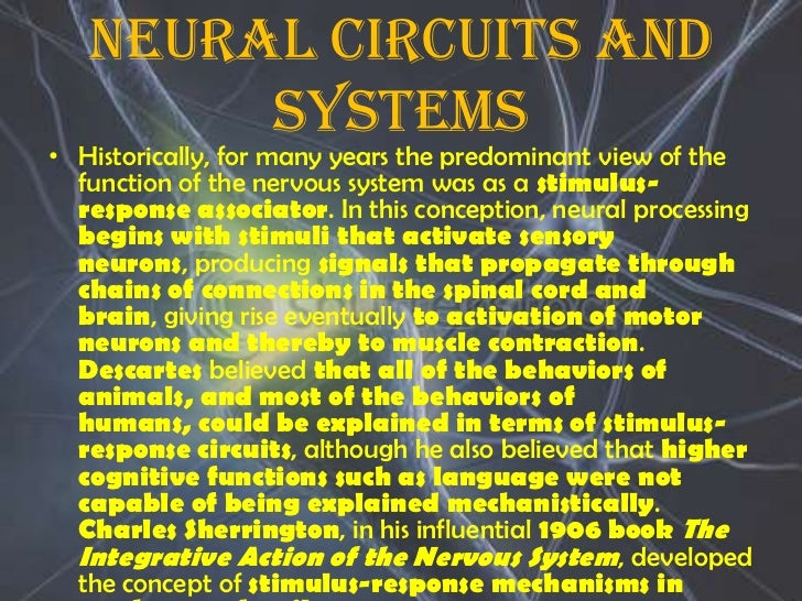 a report of the nervous system H4 chapter 8: neurological system the nervous system consists of the central nervous system (cns), the peripheral nervous system, and the autonomic nervous system.