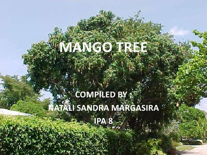 MANGO TREE<br />COMPILED BY :<br />NATALI SANDRA MARGASIRA<br />IPA 8<br />