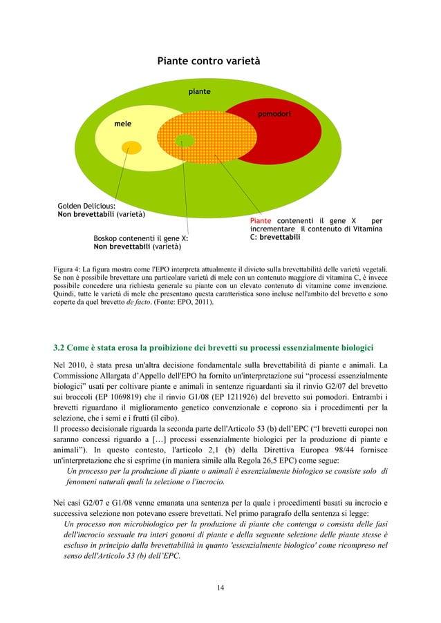 Figura 4: La figura mostra come l'EPO interpreta attualmente il divieto sulla brevettabilità delle varietà vegetali. Se no...