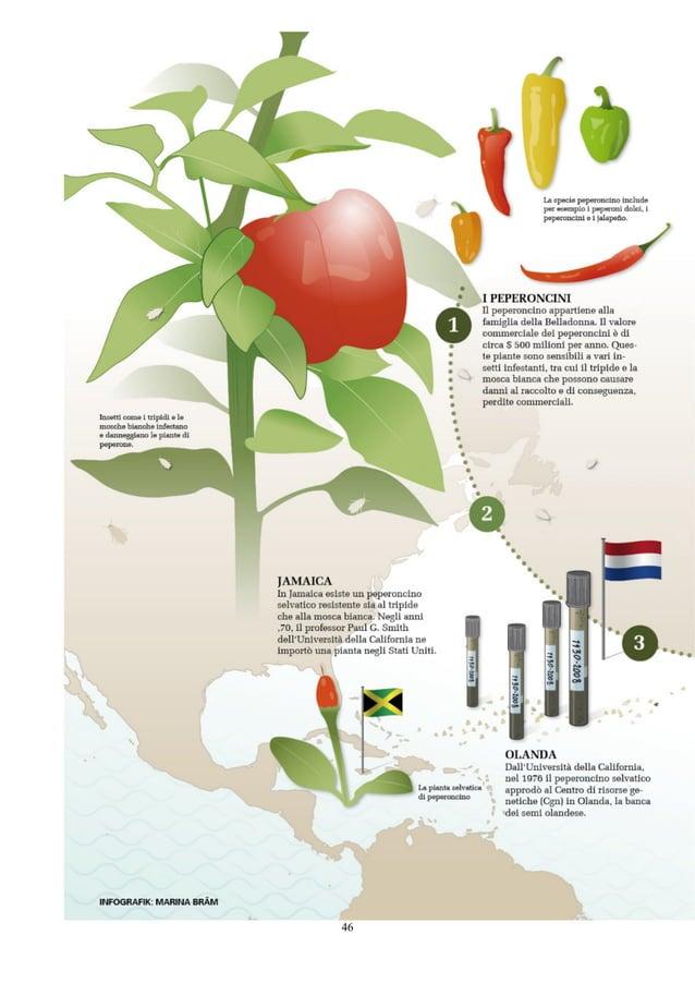 L'industria dei brevetti sta prendendo il controllo sul nostro cibo?