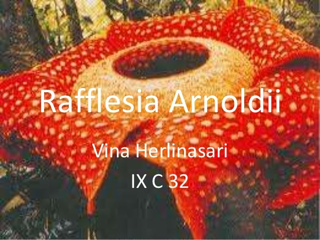 Report Text Rafflesia Vina 9 C 32
