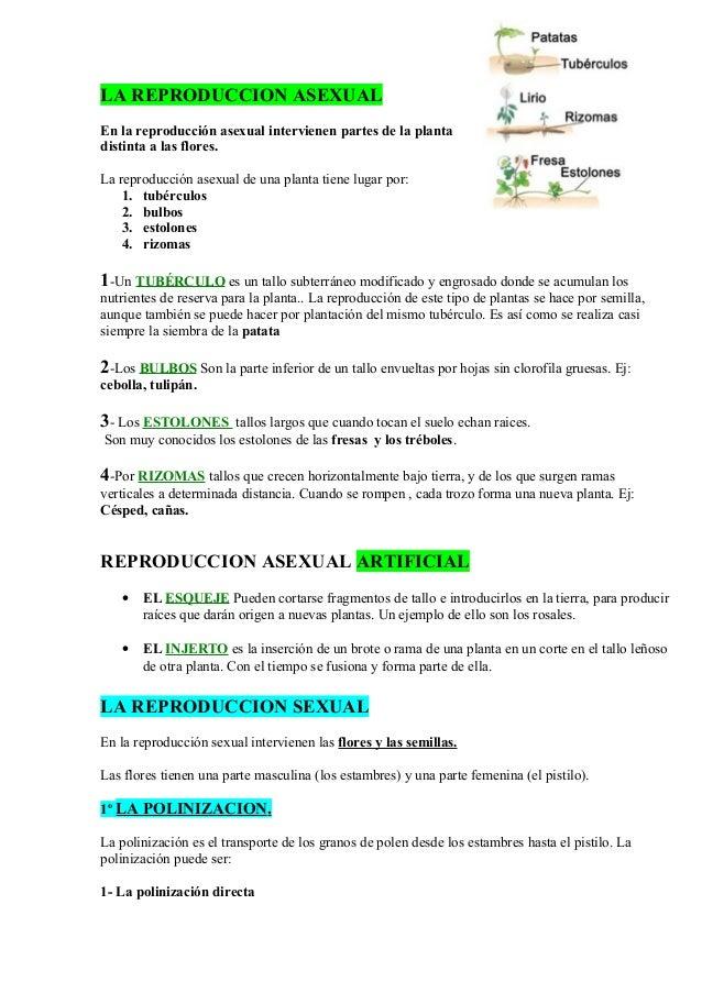 Esquema de la reproducci n de las plantas for Incompatibilidad en plantas