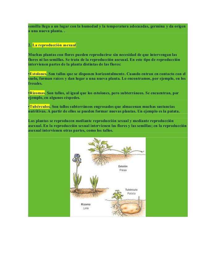 Reproduccion asexual en plantas esquemas