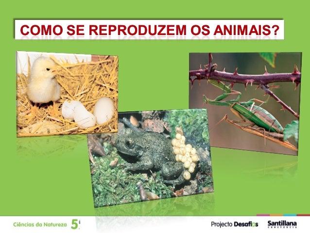 Reprodução           Função que assegura a continuidade                               das espécies.             A reproduç...