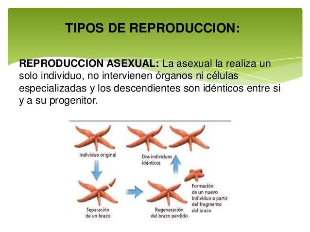 Celulas especializadas para la reproduccion asexual