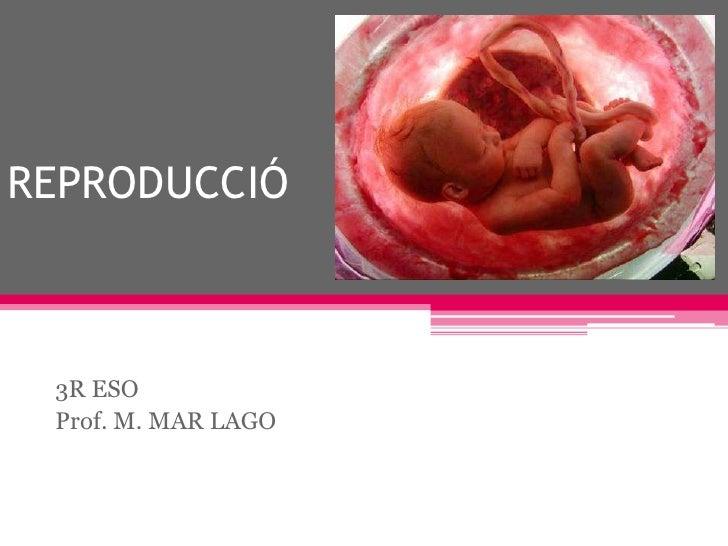 REPRODUCCIÓ<br />3R ESO<br />Prof. M. MAR LAGO<br />