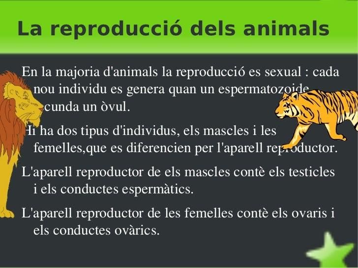 La reproducció dels animals <ul><li>En la majoria d'animals la reproducció es sexual : cada nou individu es genera quan un...