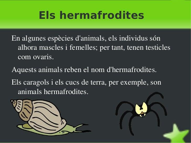 Reproducció animals (ivelin) Slide 2