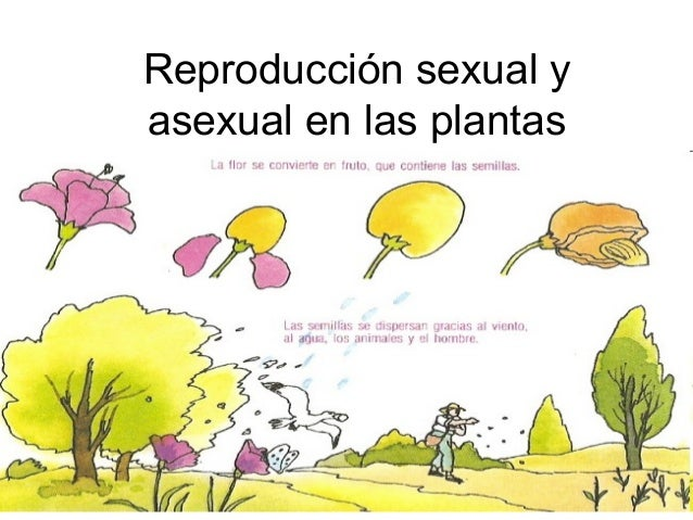 Imagenes reproduccion sexual y asexual
