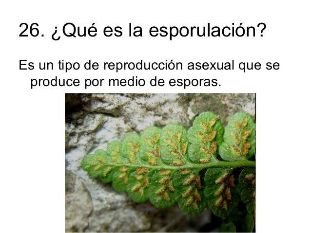 Ejemplos de plantas por reproduccion asexual fision
