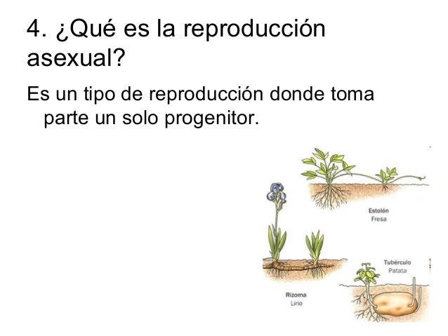 Reproduccion asexual bambu
