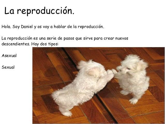 La reproducción.Hola. Soy Daniel y os voy a hablar de la reproducción.La reproducción es una serie de pasos que sirve para...