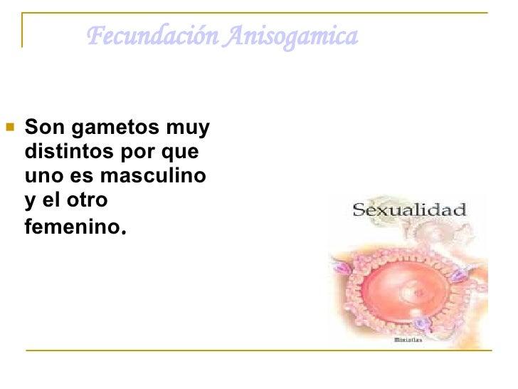Fecundación Anisogamica <ul><li>Son gametos muy distintos por que uno es masculino y el otro femenino . </li></ul>