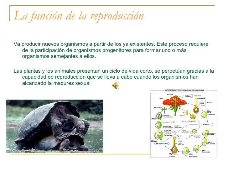 La función de la reproducción <ul><li>Va producir nuevos organismos a partir de los ya existentes. Este proceso requiere d...