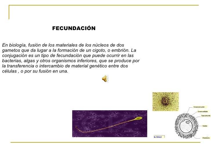 FECUNDACIÓN  En biología, fusión de los materiales de los núcleos de dos gametos que da lugar a l...