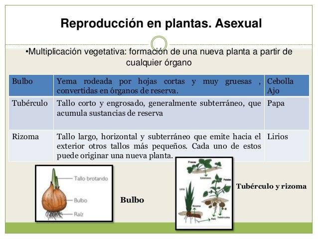 Reproducción (2) Slide 2