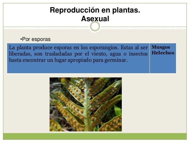 Reproducción (2) Slide 3