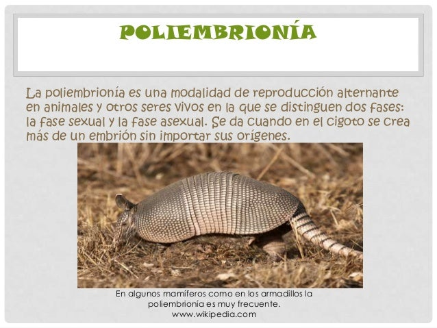 Poliembrionia asexual