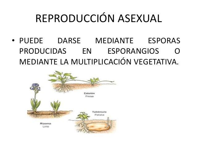 Reproduccion asexual de las plantas