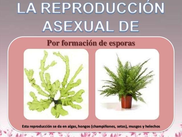 Reproduccion asexual en musgos y helechos plantas