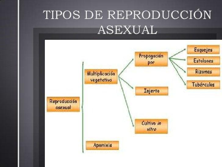 Tipos de reproducciones asexual spores