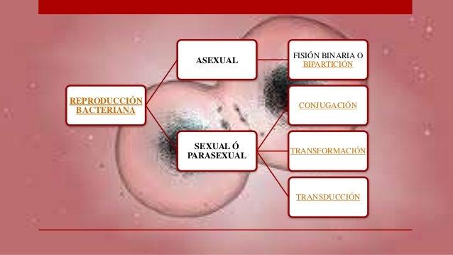 Reproduccion sexual y asexual de las bacterias