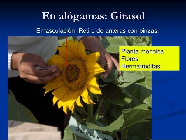 Diferencia entre flor hermafrodita y unisexual