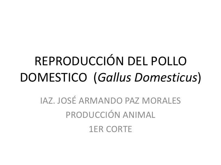 REPRODUCCIÓN DEL POLLO DOMESTICO  (GallusDomesticus)<br />IAZ. JOSÉ ARMANDO PAZ MORALES<br />PRODUCCIÓN ANIMAL <br />1ER C...