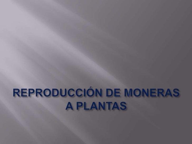REPRODUCCIÓN DE MONERAS A PLANTAS<br />