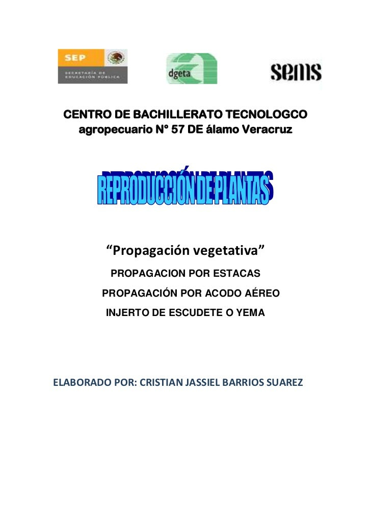 """CENTRO DE BACHILLERATO TECNOLOGCO   agropecuario N° 57 DE álamo Veracruz         """"Propagación vegetativa""""          PROPAGA..."""