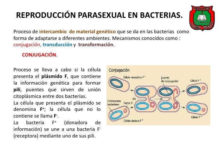 Reproduccion bacteriana asexual