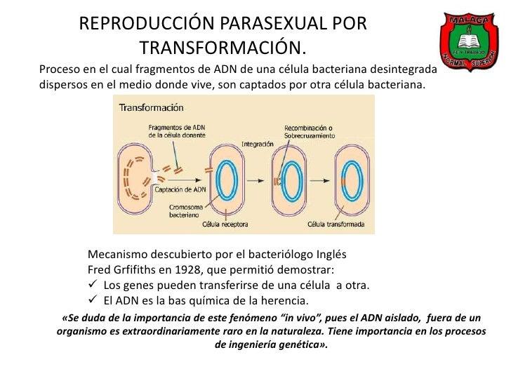 Reproduccion parasexual de los hongos
