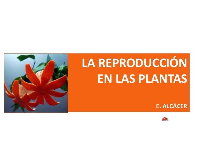LA REPRODUCCIÓN EN LAS PLANTAS E. ALCÁCER