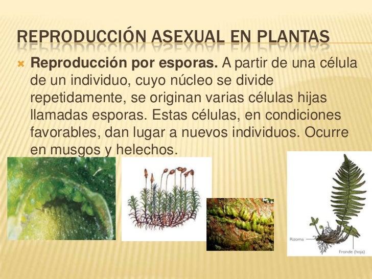Reproduccion asexual en plantas por esporas definicion