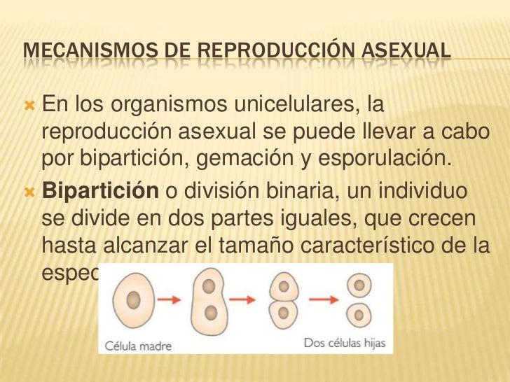Reproduccion asexual en plantas ejemplos de resume