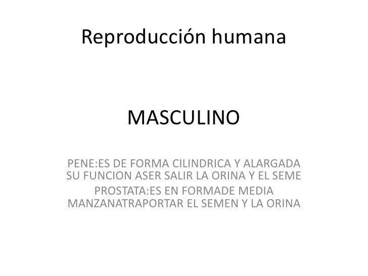 Reproducción humanaMASCULINO<br />PENE:ES DE FORMA CILINDRICA Y ALARGADA SU FUNCION ASER SALIR LA ORINA Y EL SEME<br />PRO...