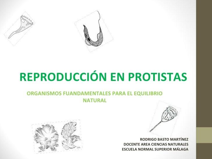 REPRODUCCIÓN EN PROTISTAS ORGANISMOS FUANDAMENTALES PARA EL EQUILIBRIO                  NATURAL                           ...