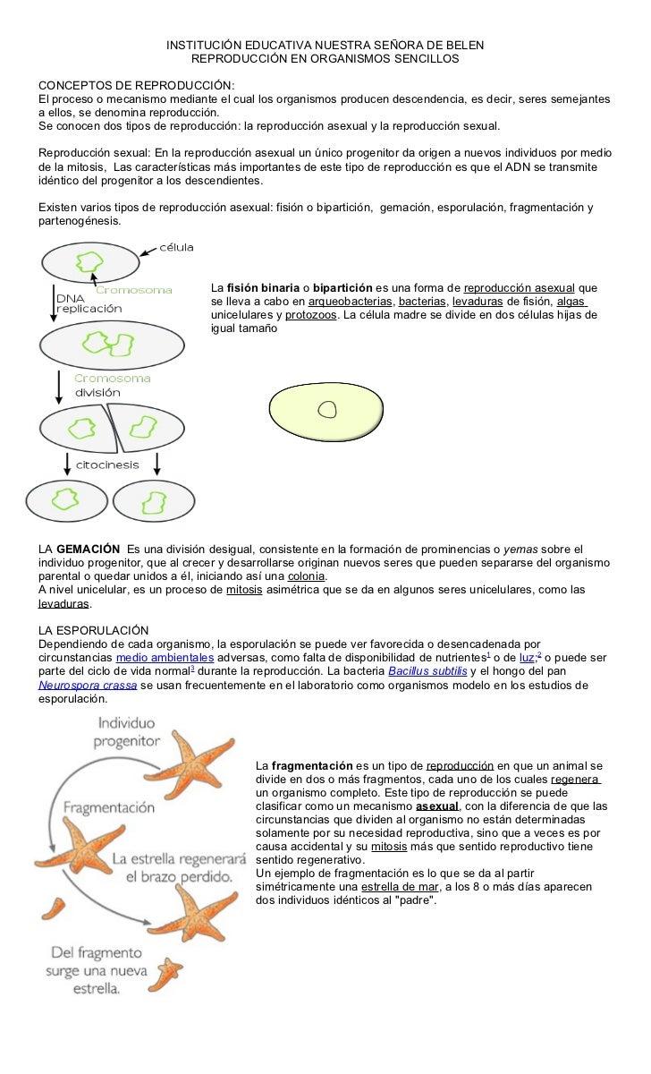 INSTITUCIÓN EDUCATIVA NUESTRA SEÑORA DE BELEN                            REPRODUCCIÓN EN ORGANISMOS SENCILLOSCONCEPTOS DE ...