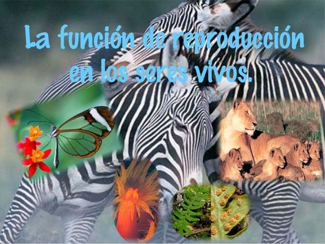 La función de reproducción en los seres vivos.
