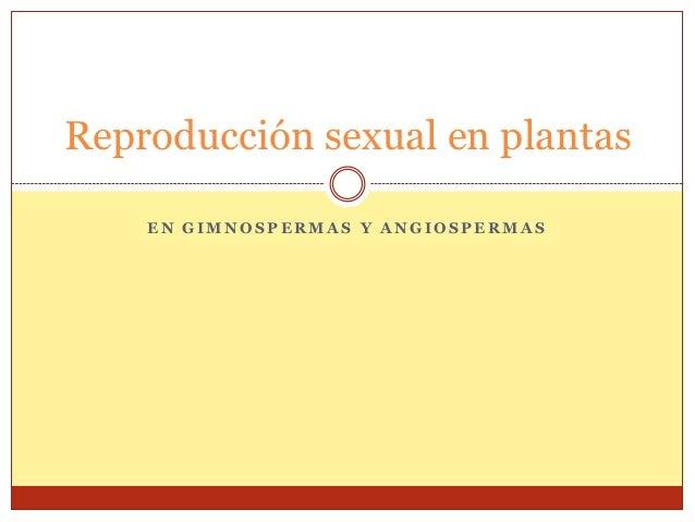 Reproducción sexual en plantas    EN GIMNOSPERMAS Y ANGIOSPERMAS