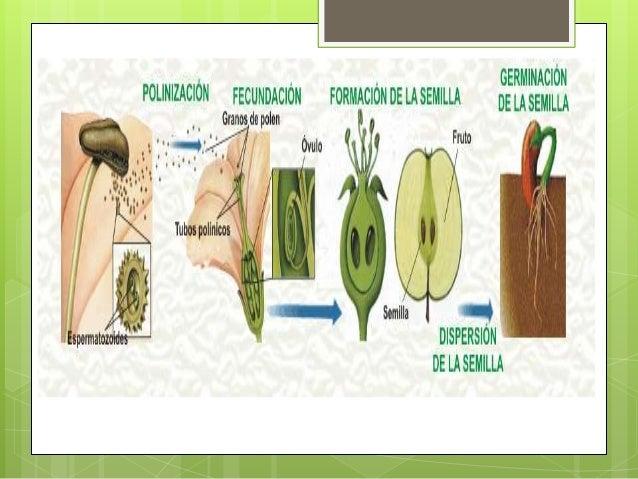 Nombre de plantas con reproduccion asexual y sus caracteristicas